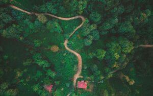 خرید زمین جنگلی