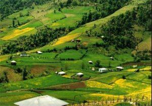 زمین های کشاورزی گیلان
